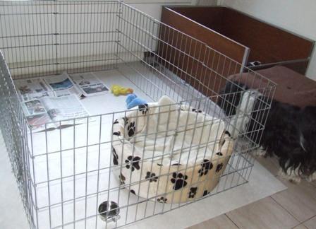 pup in bench leren slapen 2
